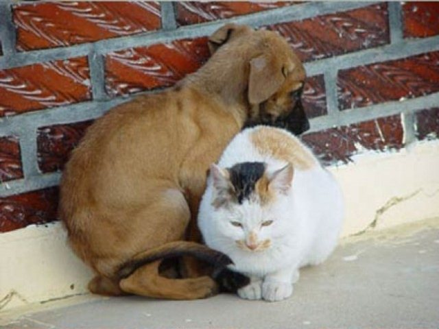 Cute dog and cat friends - photo#43
