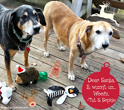 two senior rescue dogs ready for Christmas