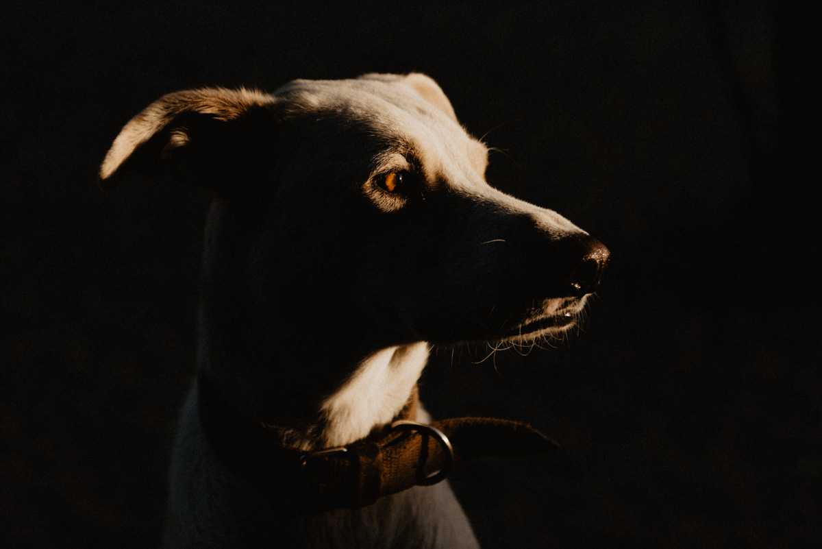 Fotografía de mascota en Sevilla - Argos