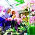 Kampung Anggrek Kediri, Warna Warni Cantiknya Bunga Anggrek