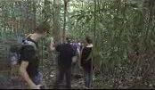 hutan bukit lawang