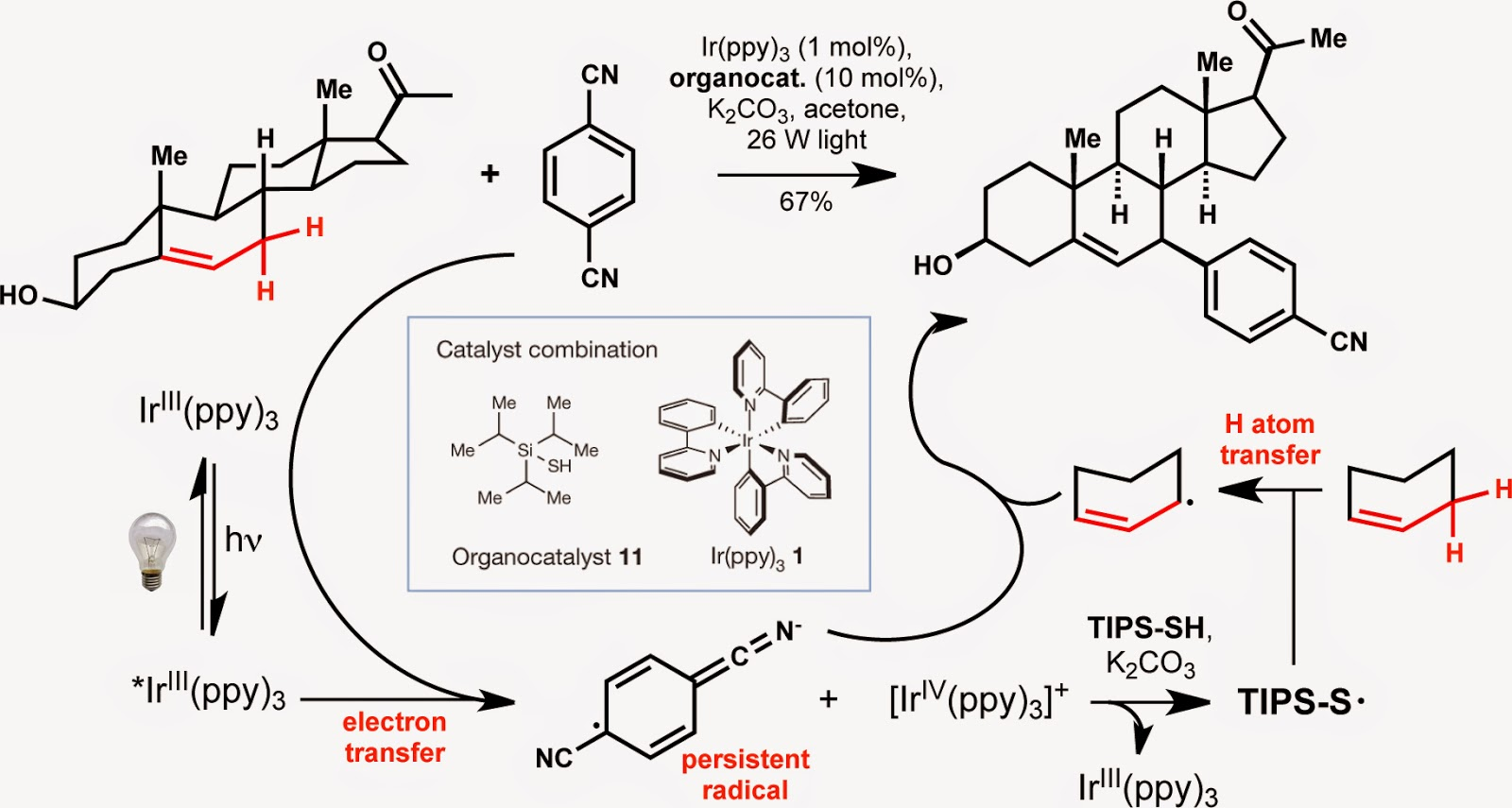 modern steroid science: Allylic Arylation of the