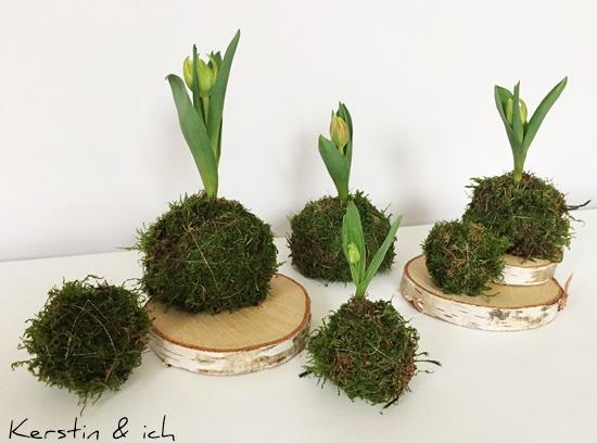 DIY Tulpenzwiebel Moos Frühling Tischdeko
