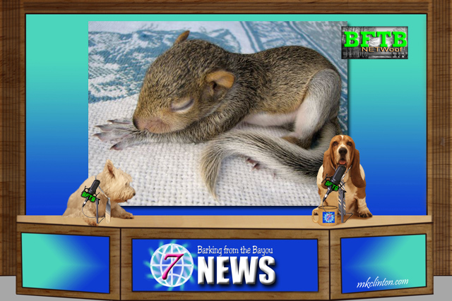 BFTB NETWoof News report on baby squirrels