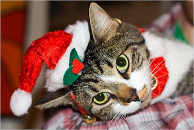 belle photo de chat pour noel