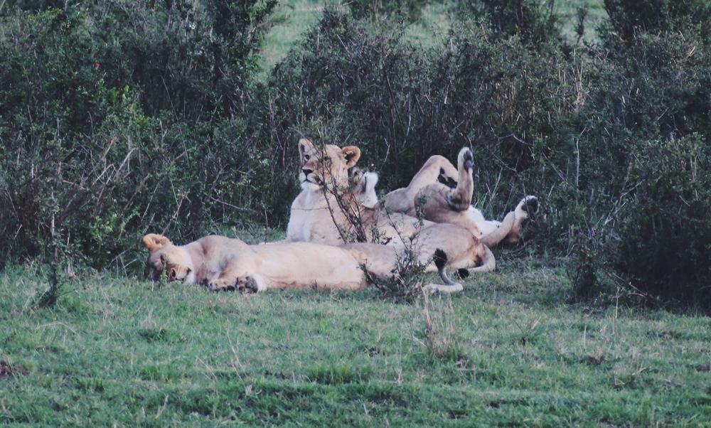 yvonne-karnath-masai-mara-nationalpark-kenya-kenia-africa-safari
