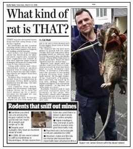 daily mail page 43
