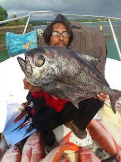Ikan mata bongsang  penghuni air dalam
