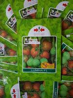 bibit buah tomat, tomat buah, benih tomat hibrida, benih tomat buah, lmga agro