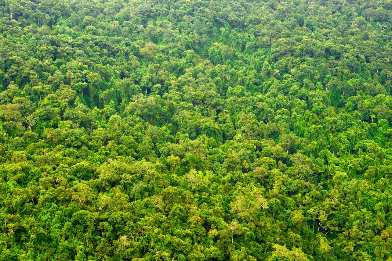 Amazon Rainforest Wallpaper HD Download For Desktop