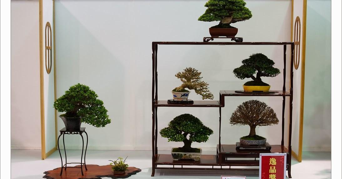 ㄚ野盆栽 (Wild Branch Bonsai Studio).: 2013華風展作品欣賞-林建良先生愛培