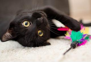 8 Cara unik kucing mengungkapkan rasa cinta pada manusia