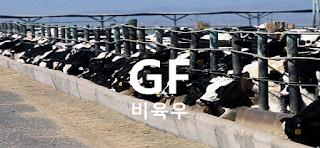 소고기 (비육우) 가격 전망 : 해외선물, 비육우 선물 매매기법 투자전략, 피더 캐틀(Feeder Cattle) CME: GF Futures (1 파운드/센트)
