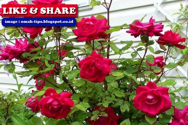 Cara Merawat Bunga Yang Benar