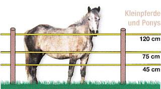Villanypásztoros védelem lovaknak