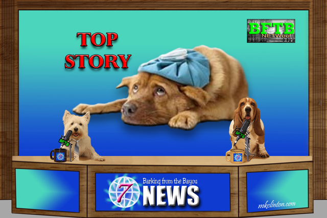 BFTB NETWoof News Top Story: Dog playing sick