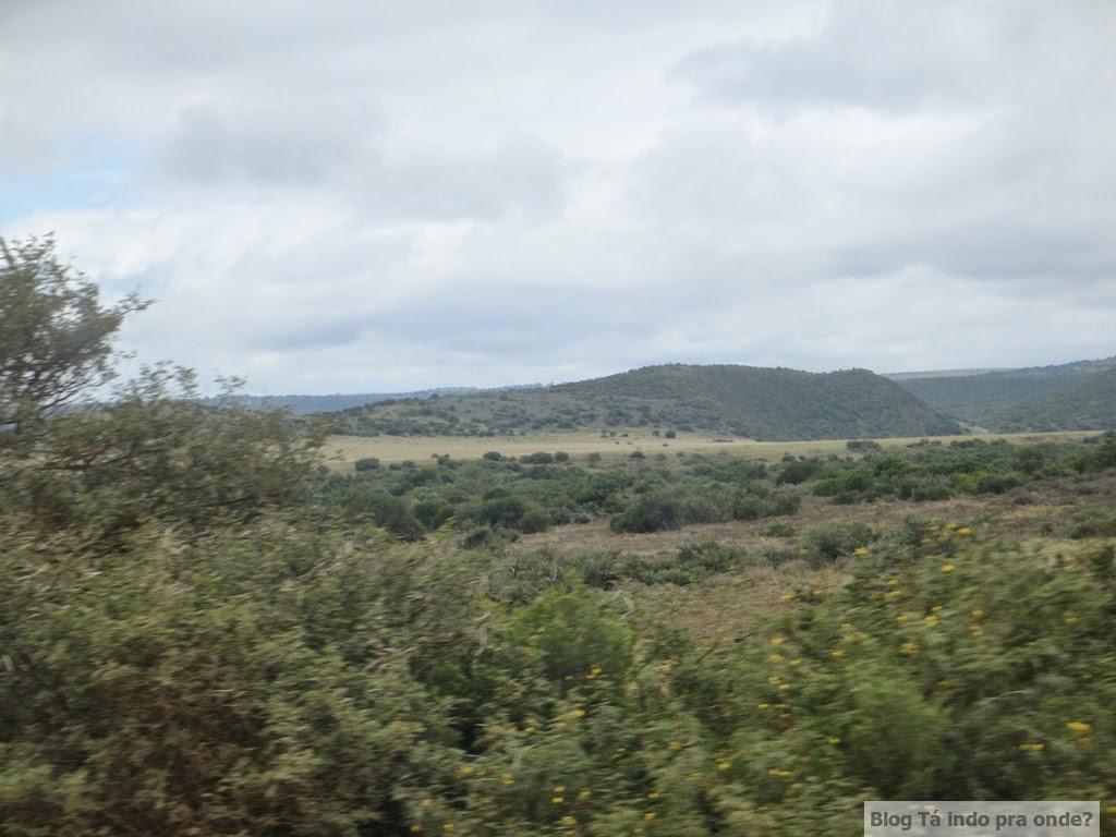 Chegando na Shamwari Game Reserve