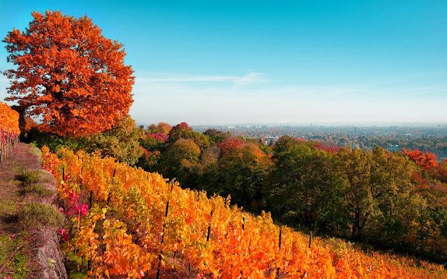 Afbeelding met wijngaard in de heuvels