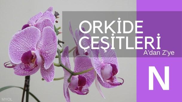 Orkide Çeşitleri N Harfi
