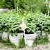 """Khu Vườn Nhà Ta: Khám phá """"nông trại di động"""" trong lòng Berlin"""