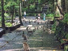 Tempat di Bali yang Banyak Monyet