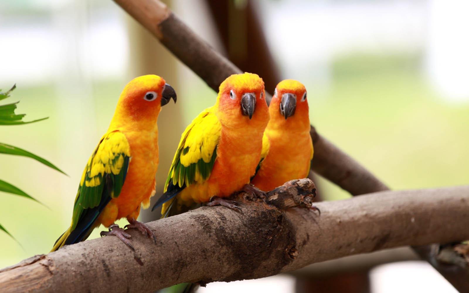 Gallery Mangklex: Love Birds Wallpapers