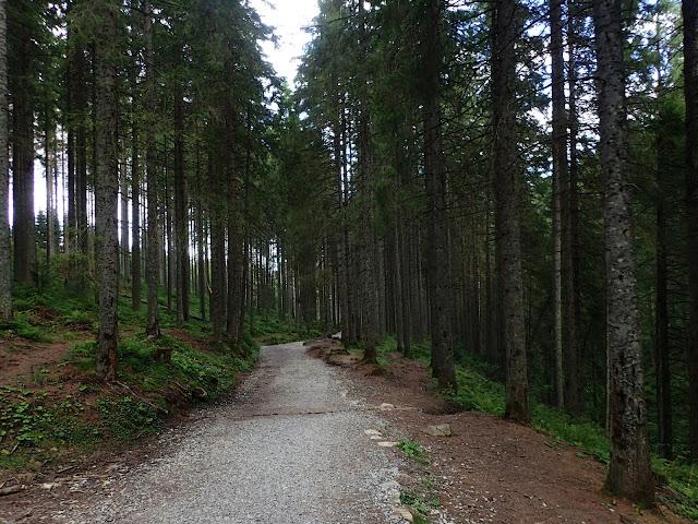 Dolina Złota, która jest otoczona zielonymi lasami ;)