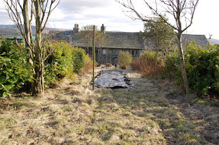 Garden, abandoned