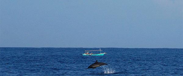 lumba-lumba yang muncul di permukaan saat perahu menuju pulau pisang