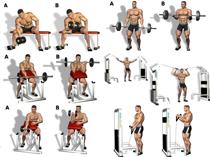 Biceps Workout Images - Workout Routines For Health