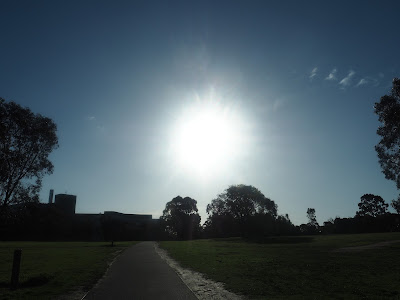 winter sun - royal park melbourne