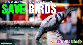 PLEASE KEEP WATER FOR BIRDS IN SUMMER