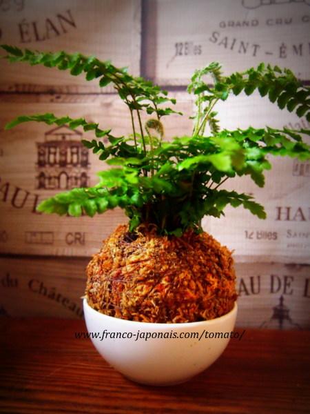 Plante interieur ou exterieur 28 images int 233 rieur for Fushia plante interieur ou exterieur