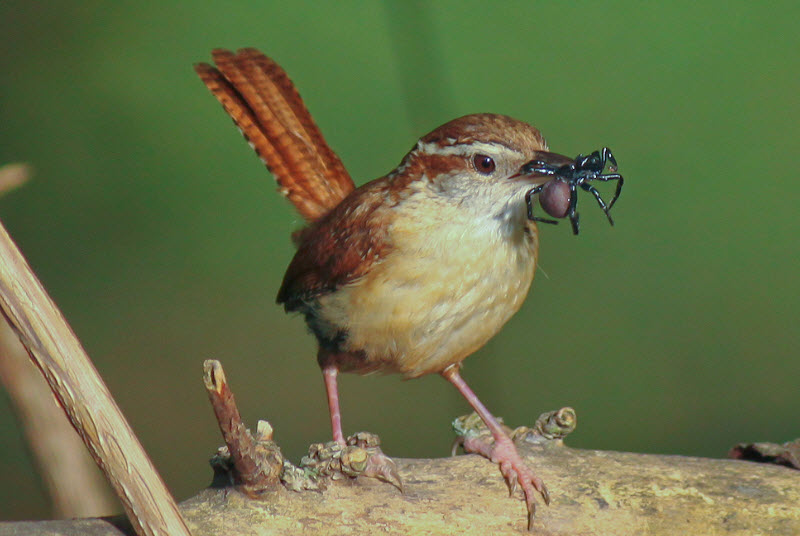 What Food Does A Sparrow Eat