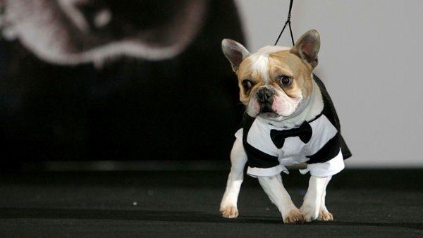 """Promulgan ley """"Cholito"""" para la tenencia de mascotas en Chile"""
