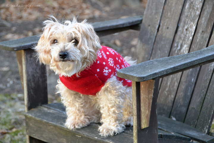Ruby models her holiday sweater from Boohoo.com