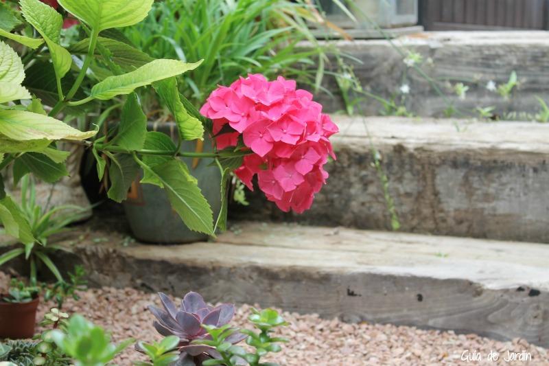 Cómo conseguir que las hortensias estén bonitas a pesar del calor