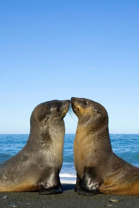 VIEW ALL WALLPAPERS: Animal Love Wallpaper