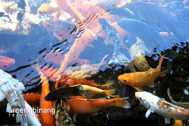 kolam ikan pemandian cikoromoy pandeglang banten