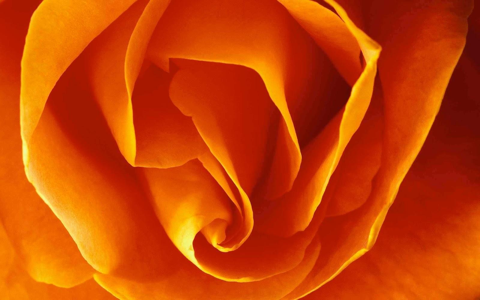 Orange Flower Wallpapers