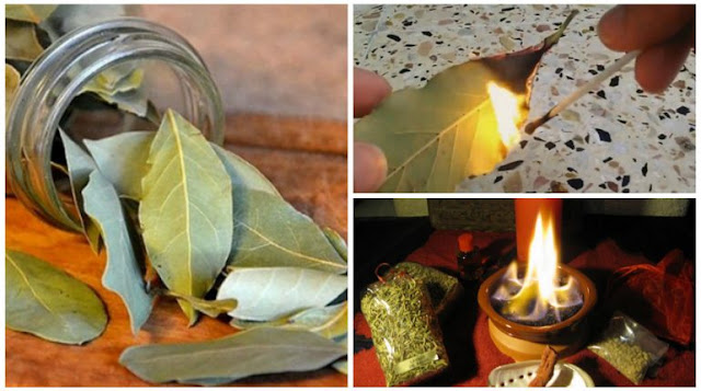Burn Bay Leaves in the House and See What Happens After 10 Minutes!
