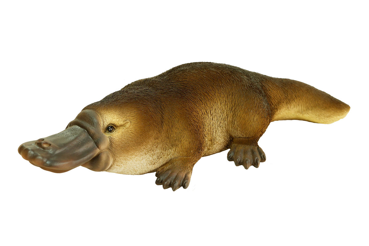 84 Gambar Hewan Mamalia Platypus Terbaik