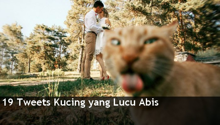 19 Tweets Tentang Kucing Ini lucu Abis