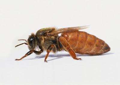 Tugas Setiap Lebah Dalam Koloni