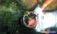 wisata pulau seribu pramuka