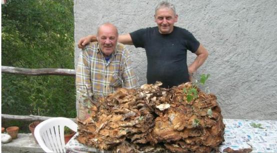 Daniele Saisi Blog: Fungo da record a Sillano: 80 chili!