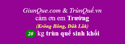 Trùn quế Krông Bông