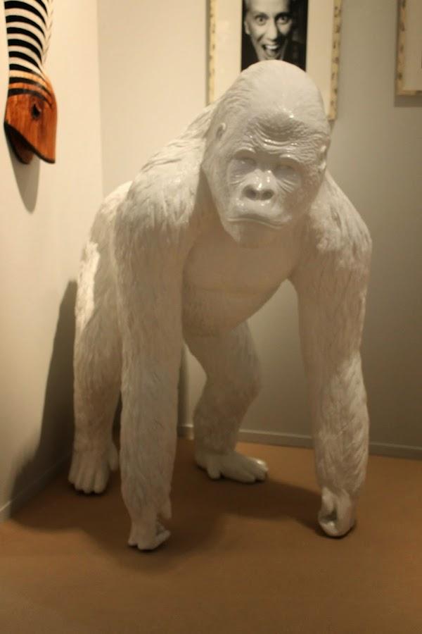 gorila habitat