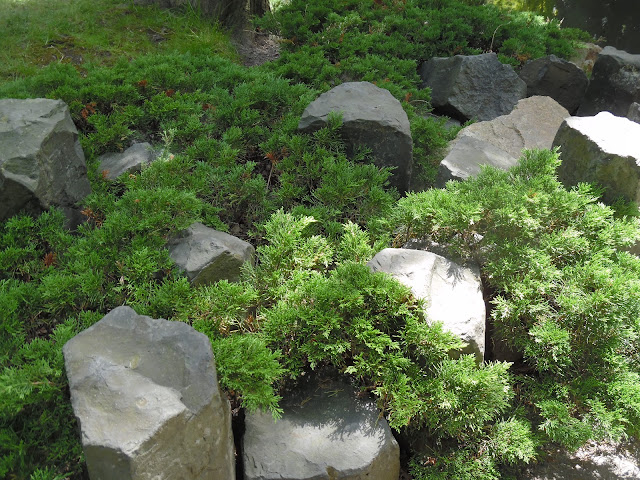 kamienie w ogrodzie japońskim