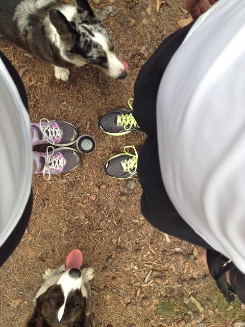 Twiggy, Yuma, pies, las, Kampinos, Puszcza, Kampinoski Park Krajobrazowy, podróże z psem, Warszawa, corgi, welsh corgi, cardigan, bieganie, bieganie w lesie, jogging, run
